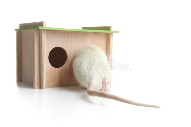 Maison en bois pour le rat images stock