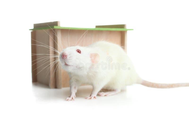 Maison en bois pour le rat photographie stock