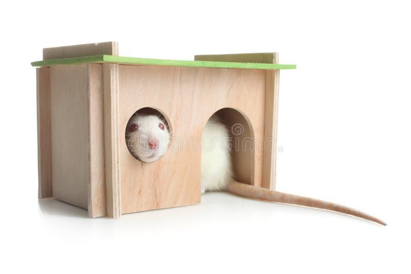 Maison en bois pour le rat image libre de droits