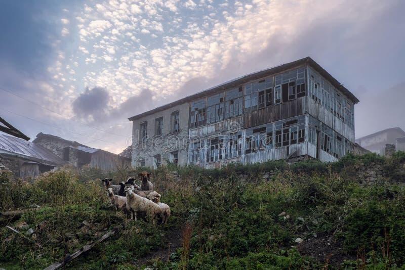 Maison et troupeau abandonnés des moutons en égalisant Adishi la Géorgie photographie stock libre de droits