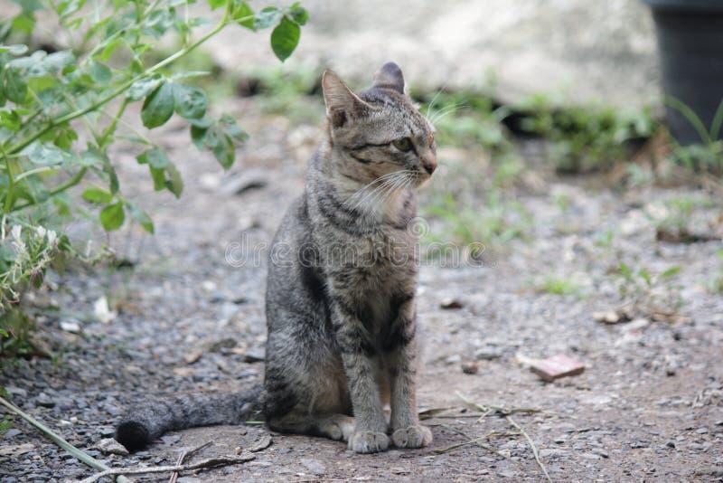 Maison mignonne de chat d'animal familier photographie stock