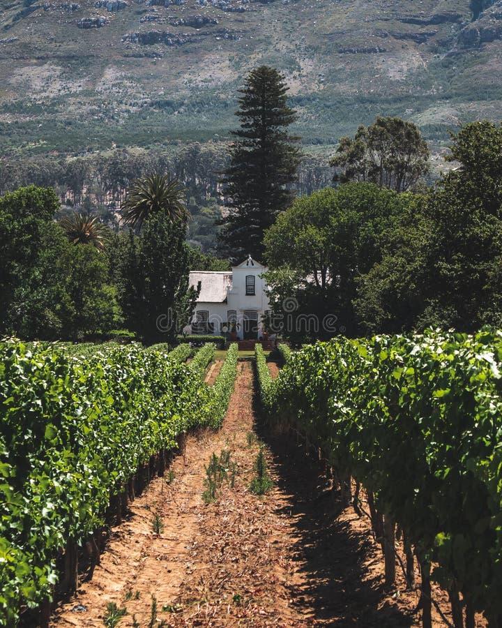Maison principale de ferme de vin dans les vignobles photographie stock