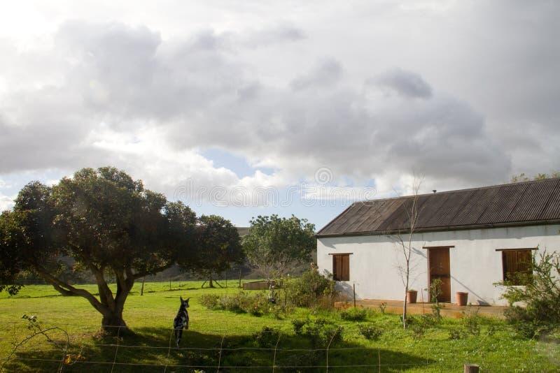 Maison rurale de ferme de cap dans l'Overberg Afrique du Sud image libre de droits