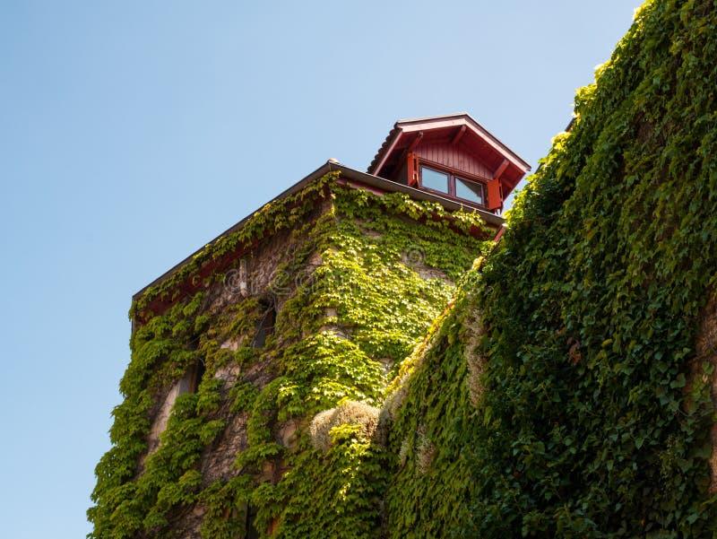 Maison typique envahie avec le lierre à Annecy, France photo stock