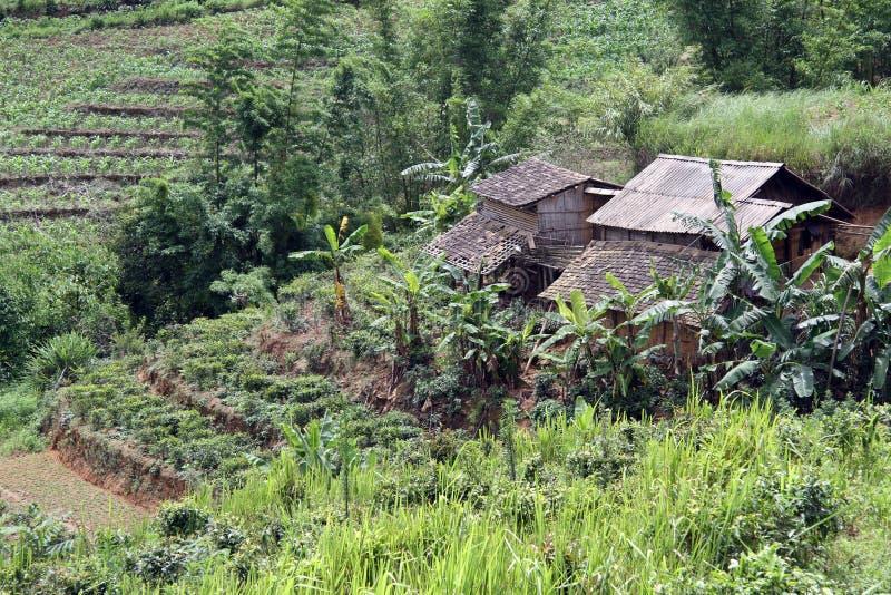 Maisons de ferme et plantation de thé image stock