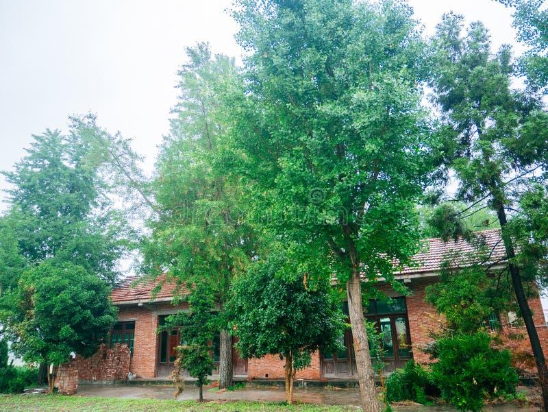 Maisons et arbre chinois de village photographie stock libre de droits