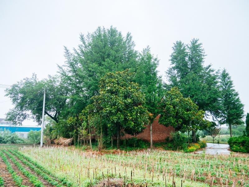 Maisons et arbre chinois de village photos libres de droits
