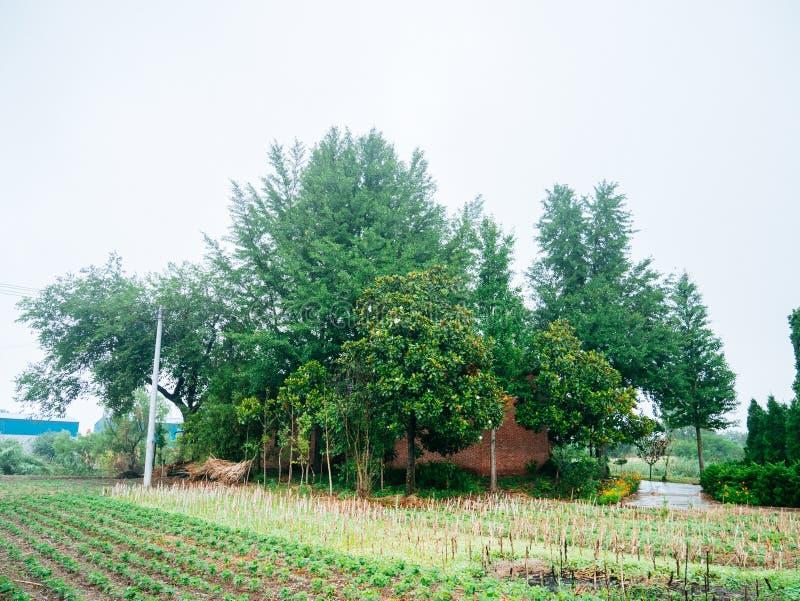 Maisons et arbre chinois de village images stock