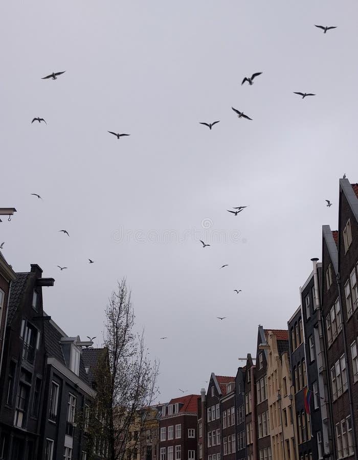 Maisons et oiseaux d'Amsterdam photographie stock libre de droits