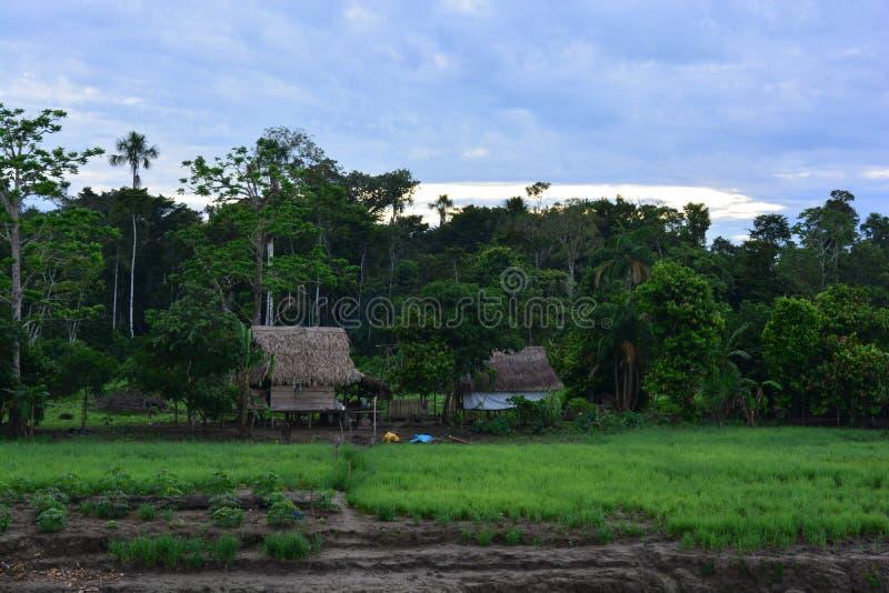 Maisons indiennes dans la jungle d'Amazone, Pérou images libres de droits
