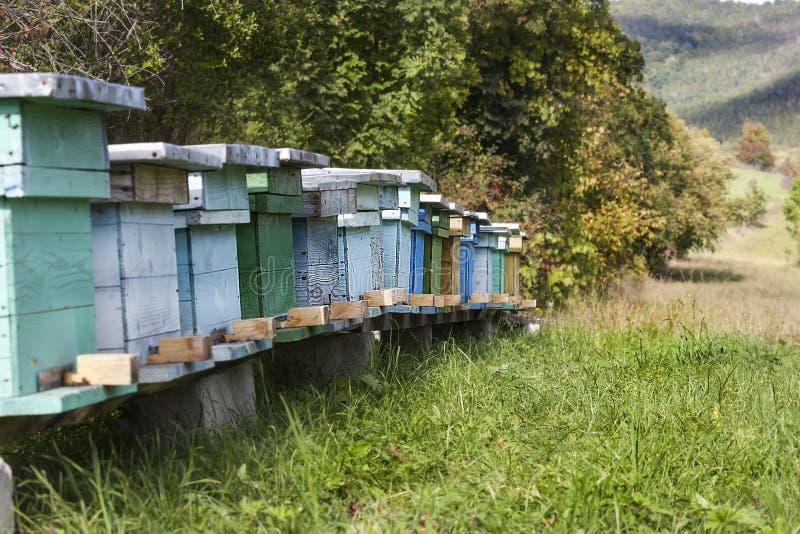 Maisons pour des abeilles photo stock