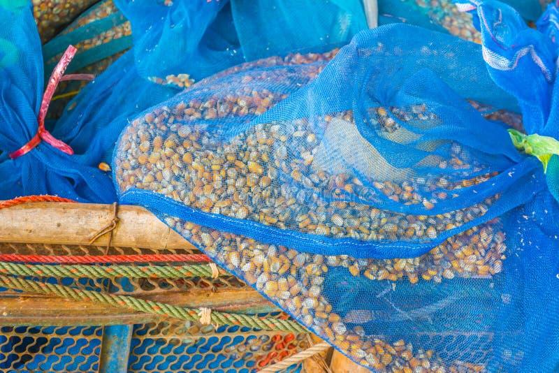 Maissamen in der Tasche stockbilder