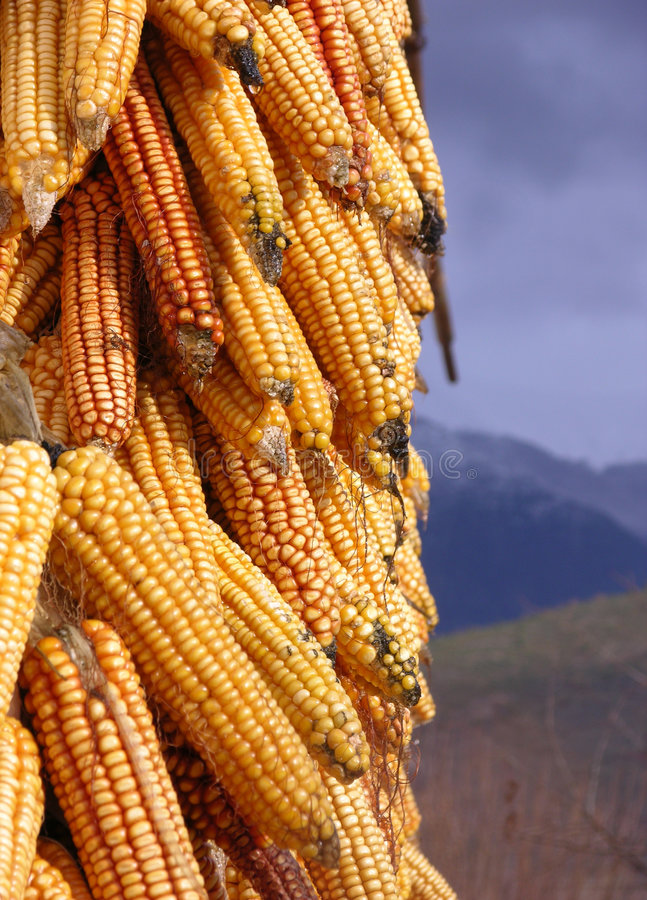 Download Maiz stock image. Image of corn, mountains, food, italy - 156431