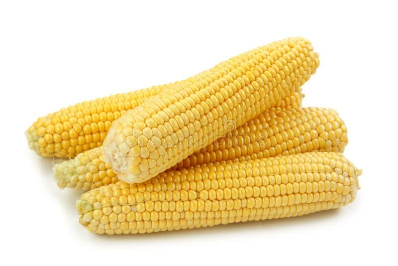 maize royaltyfria bilder