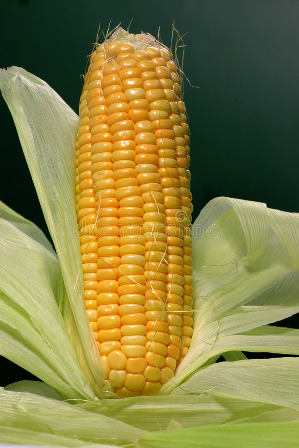 maize royaltyfri foto