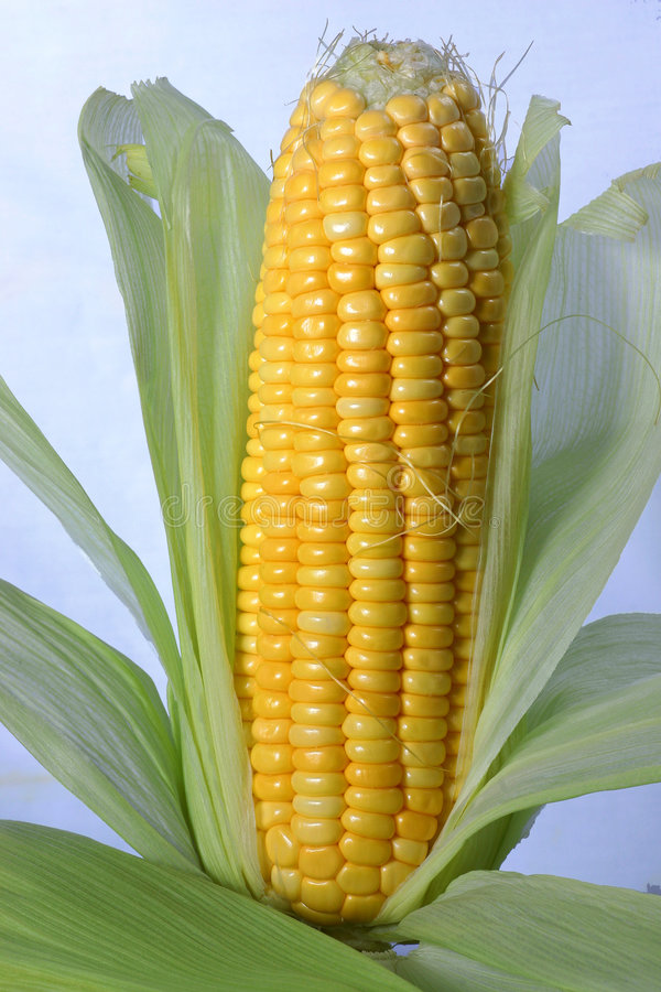 maize royaltyfri fotografi