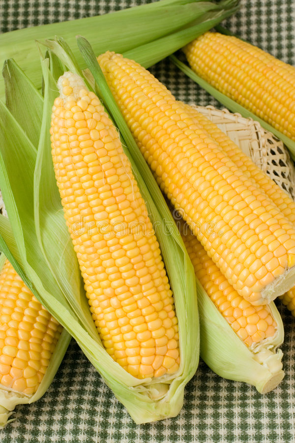 Free Maize Royalty Free Stock Photo - 2417895