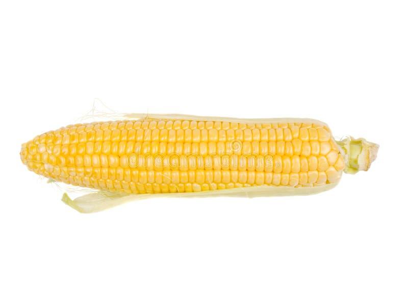 maize royaltyfria foton