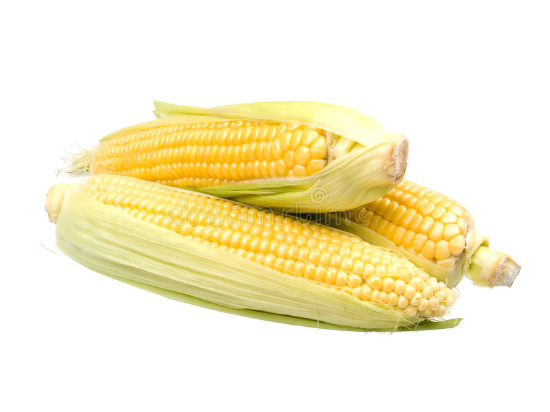 Download Maize stock photo. Image of husk, cereal, green, drink - 2856392