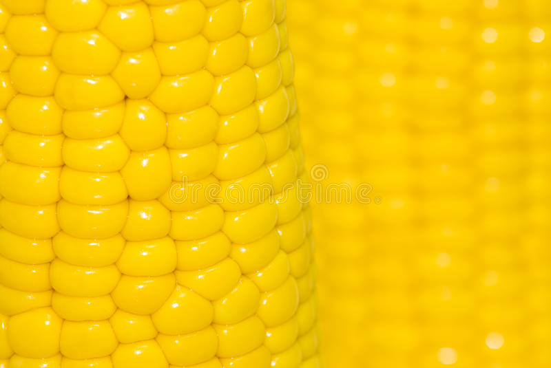 Download Maize stock photo. Image of sweetcorn, background, harvest - 28893788