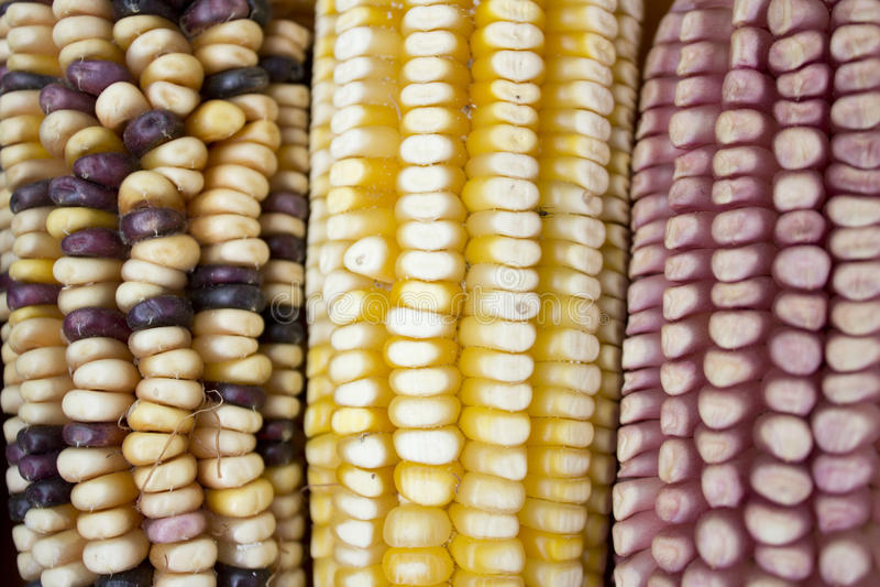 maize foto de stock