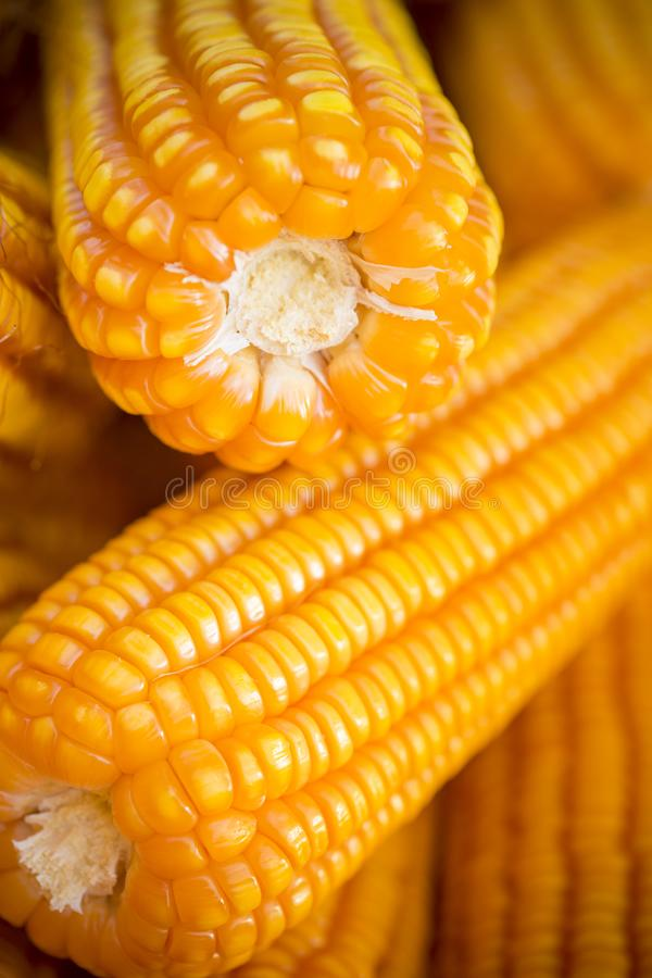 Close macro shoot of Maizebhutta crop, Thakurgaon, Bangladesh. Maize bhutta a CEREAL crop, Zea mays of the family Graminae, order Cyperales. In the Bangladesh royalty free stock photos