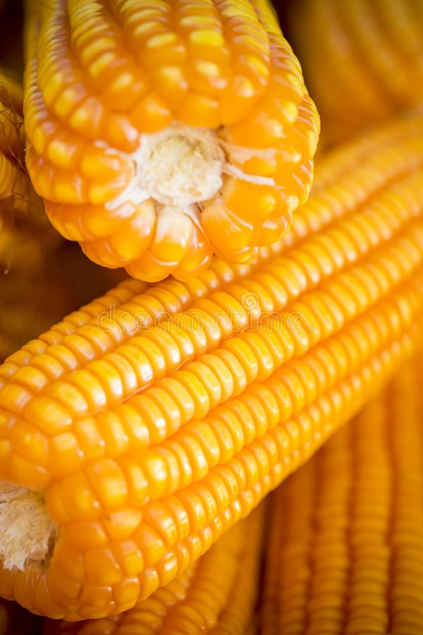 Close macro shoot of Maizebhutta crop, Thakurgaon, Bangladesh. Maize bhutta a CEREAL crop, Zea mays of the family Graminae, order Cyperales. In the Bangladesh royalty free stock photography