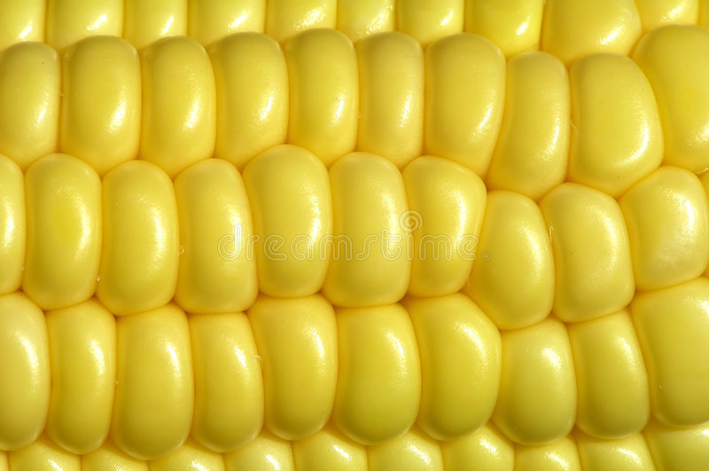 Download Maize cob stock photo. Image of plant, vegetable, pearl - 153878