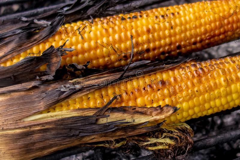 Maize cobs grill. Corn vegetables are fried or baked on open fire. Barbecue kitchen party close up image. Cooking on wire rack stock photos