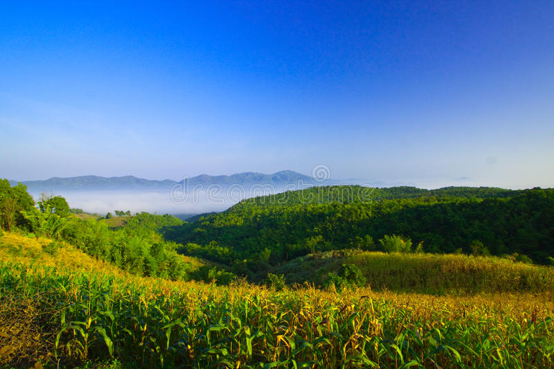Maize cultivation on the mountain stock photo