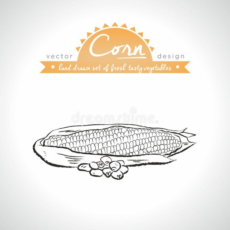 maize Skissar den utdragna samlingen för handen av vektorn detaljerade nya grönsaker isolerat royaltyfri illustrationer