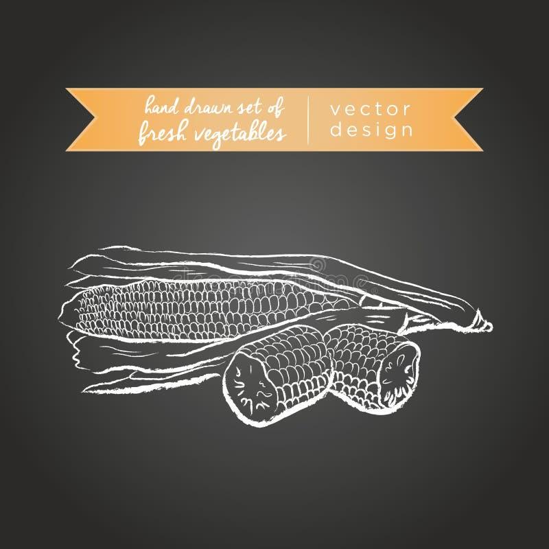 maize Ställ in av nya grönsaker, helt, halvt och bitit med bladet också vektor för coreldrawillustration Isolerat på svart tavla vektor illustrationer