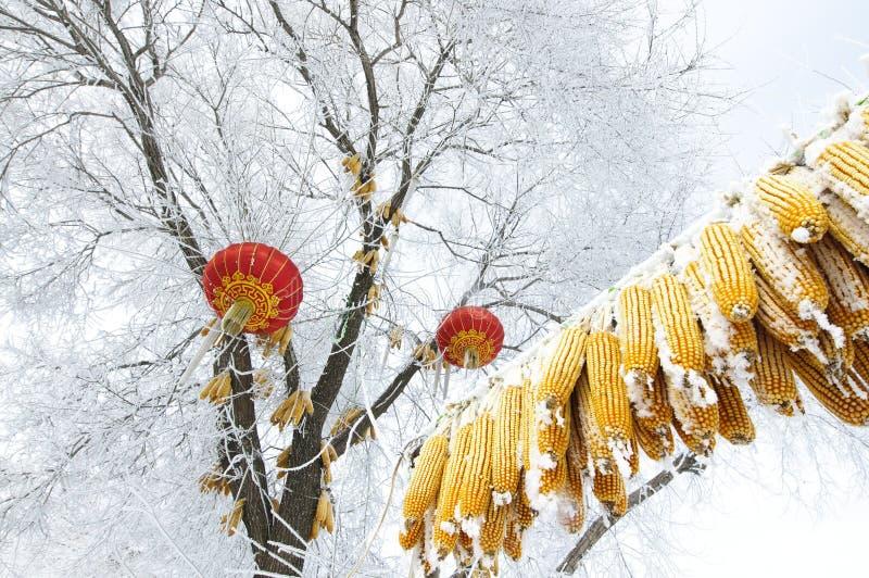 Maizes som hänger på treen med rime arkivbilder