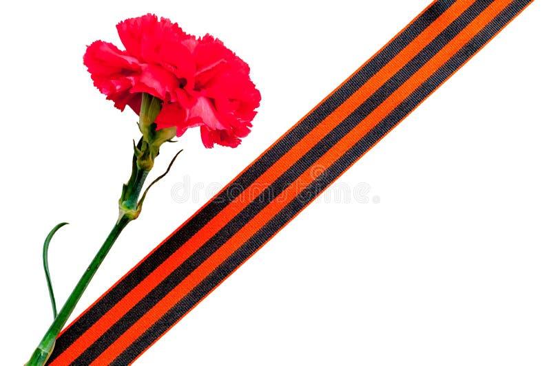 9 Maj bakgrund Röd nejlika med det George bandet på den vita bakgrunden arkivfoton