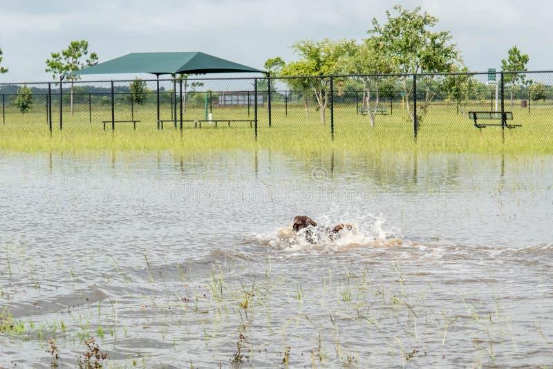 Maj 30, 2015 - Beverly Kaufman Dog Park, Katy, TX: spela för hundkapplöpning arkivfoto