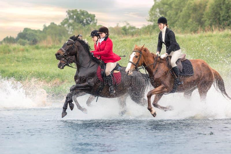 Maj 20, 2018 moscow Styrka för tre skickliga ryttarinnor, genom att vada hästarna för flod grensle arkivfoto