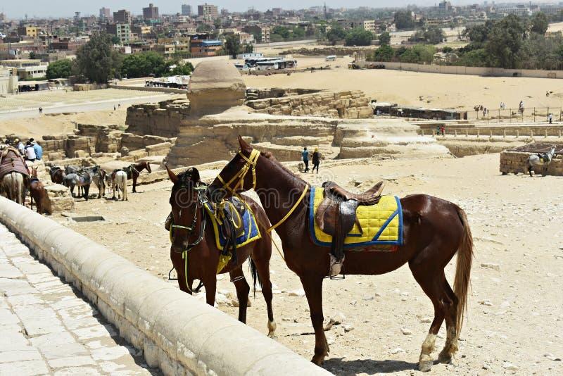 Maj, 6, 2019 Ostros?upy Giza, Kair, Egipt obraz royalty free