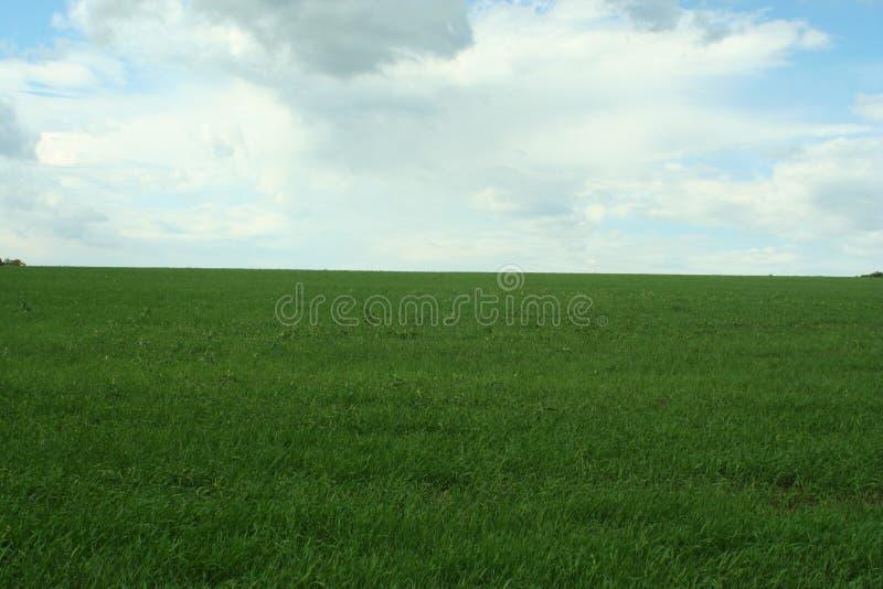 Maj zieleni pole i Maja deciduous las zdjęcie stock