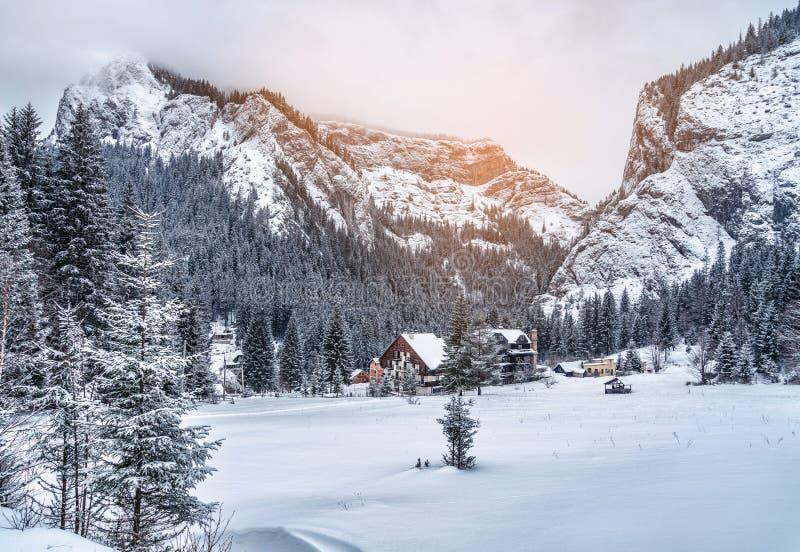 Majestätische Berge im Winter mit weißen, schneebedeckten Fichten Wunderbarer Sonnenuntergang in der Winterlandschaft Erstaunlich lizenzfreie stockfotografie