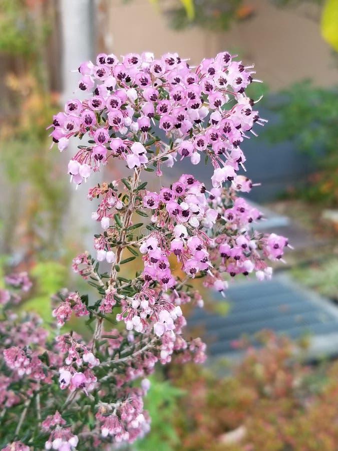 Majestätische Blüte im Herbst lizenzfreies stockfoto
