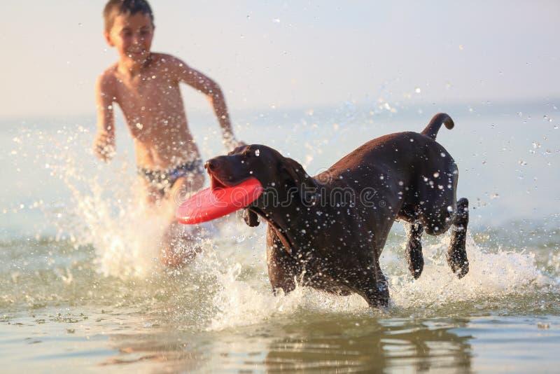 Majestätische sonnige Sommerlandschaft Am Tag ist der kleine Junge das Spielen und laufend springt mit dem jagenden braunen Hund  lizenzfreies stockfoto
