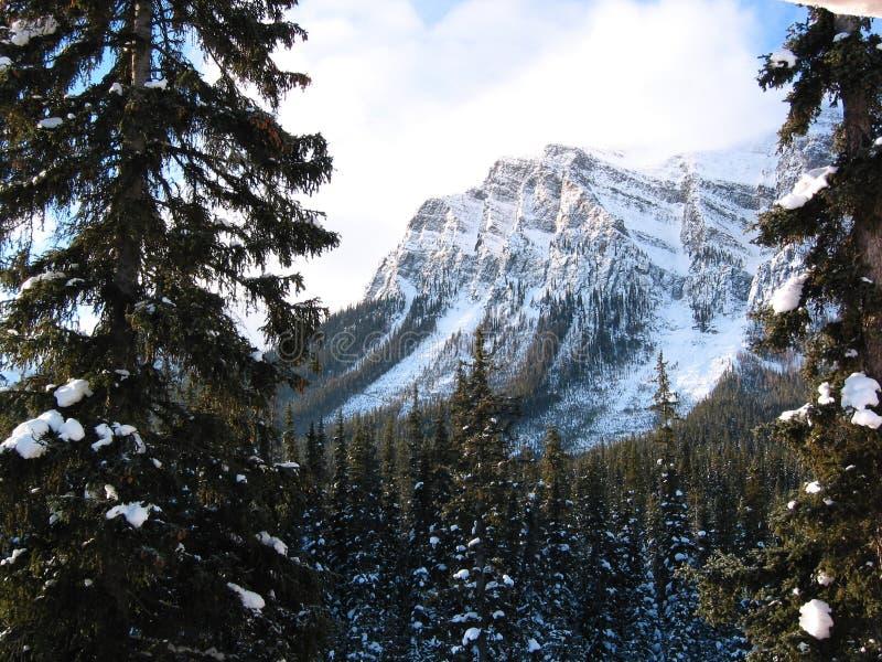 Majestätischer Berg mit einem schneebedeckten Wald stockfotografie