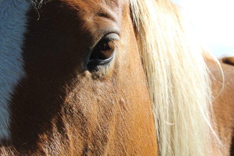 Majestätisches Pferd lizenzfreie stockfotografie
