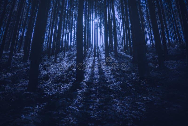 Majest?tisk carpathian prydlig skog p? natten arkivfoto