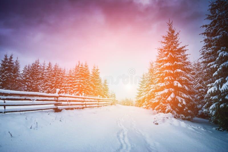 Majestätisk Carpathian soluppgång arkivfoton