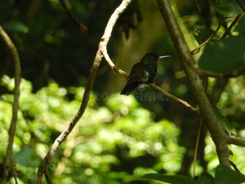 Majestätisk fågel arkivfoto