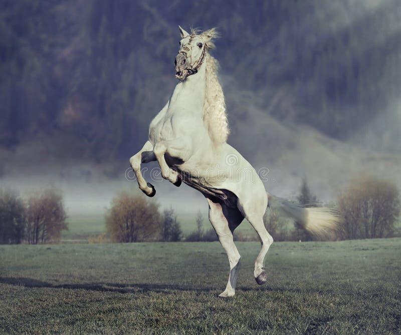 Majestätisk hästbanhoppning på den gröna ängen arkivfoto
