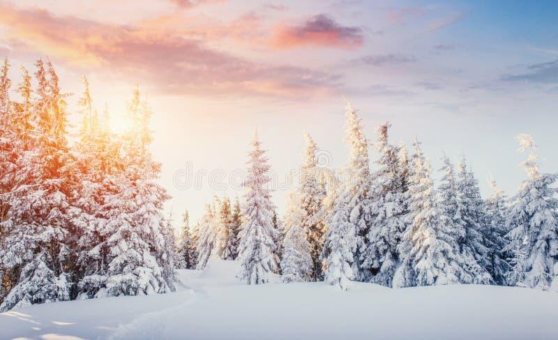 Majestätiska berg för mystiskt vinterlandskap i vinter Dolt träd för magisk vintersnö dramatisk plats carpathian fotografering för bildbyråer