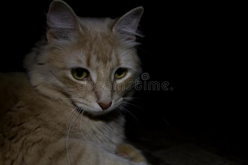 Majestätiska Cat Patiently Waits royaltyfria bilder