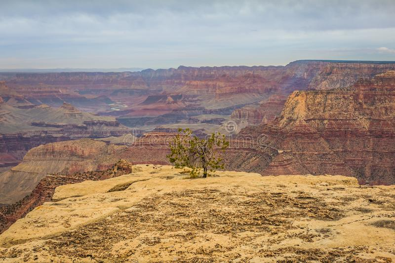 Majestätiska Grand Canyon, Arizona, Förenta staterna arkivfoton